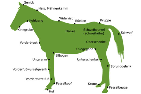 Das Pferd - Pferdekörper und Anatomie - meinePferde.eu