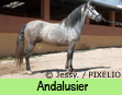 Andalusier
