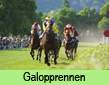 Galopprennen